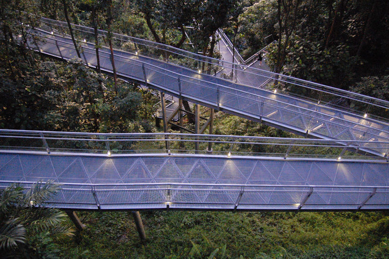 Forest Walk elevated walkway.