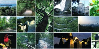 Southern Ridges, Marang Trail, FaberWalk, Canopy walk, Singapore