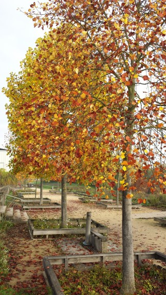It's a beautiful time to run - the trees in the park are changing colours and shedding their leaves.