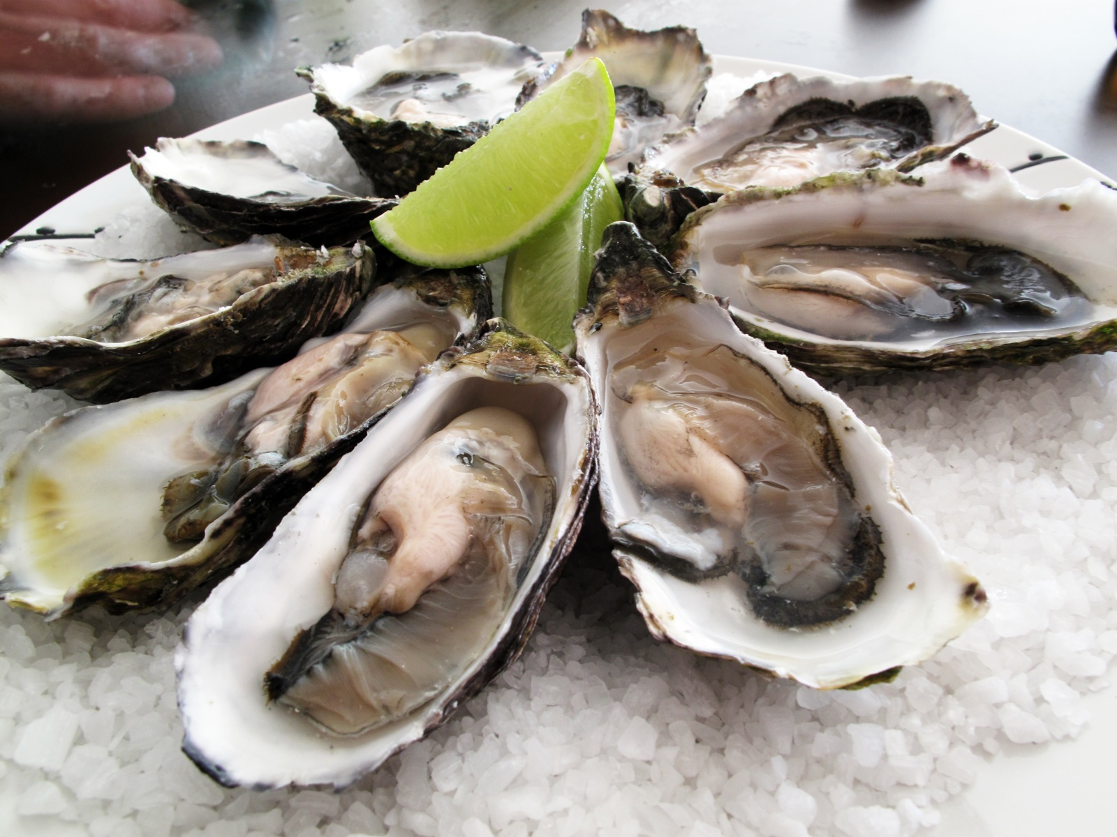 oysters runners