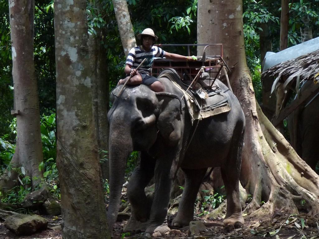 elephant_trekking_Éclusette