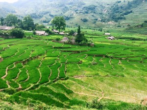 Rewarding view of the rice fields from mid-point
