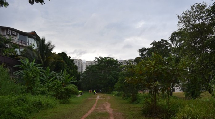 Green Corridor (A view to cherish) - Photo Credit : Recovering Addict Runner