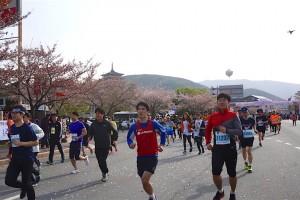 Runners at Gyeongju Cherry Blossom Marathon 2016