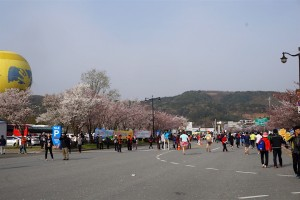 Cherry blossoms line the race route at Gyeongju Cherry Blossom Marathon 2016