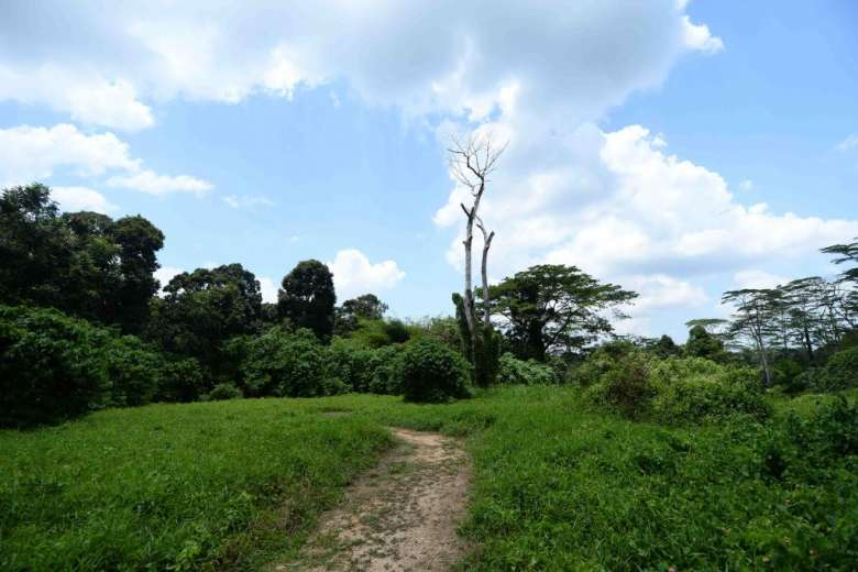views_of_chestnut_nature_park_south_along_the_hiking_trail
