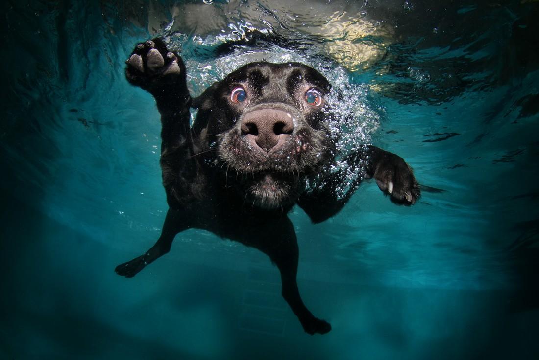 Aqua Running 3
