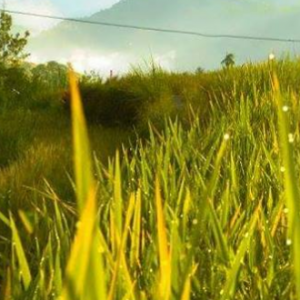 Rice Terraces Marathon 4th Edition 2017