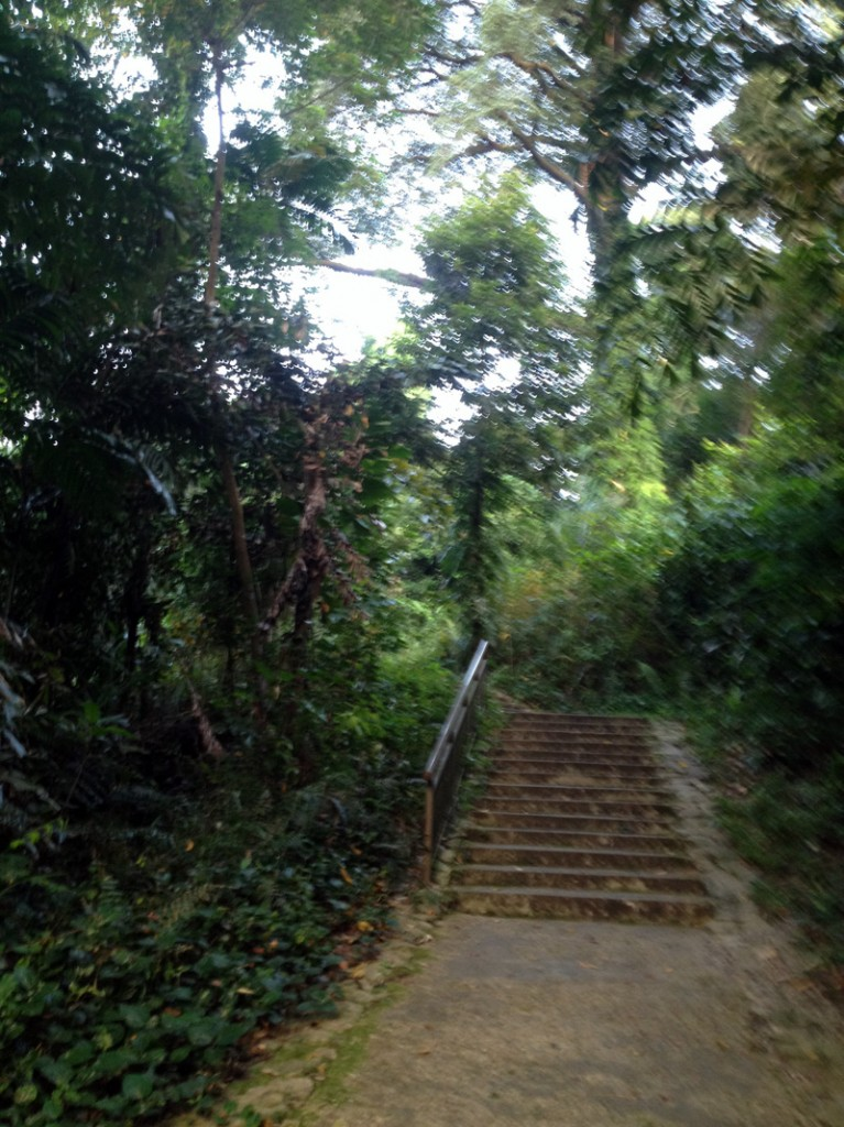 Entrance to Marang Trail Singapore