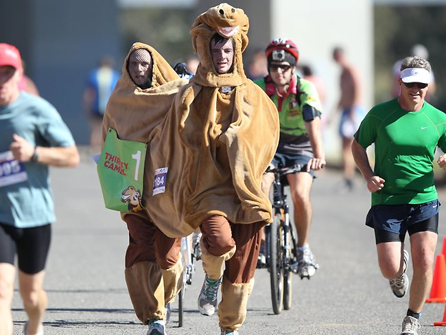 126081-camel-at-the-geelong-half-marathon