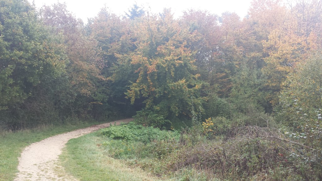 The prune trees, maple trees, and willows are boasting their foliage though.