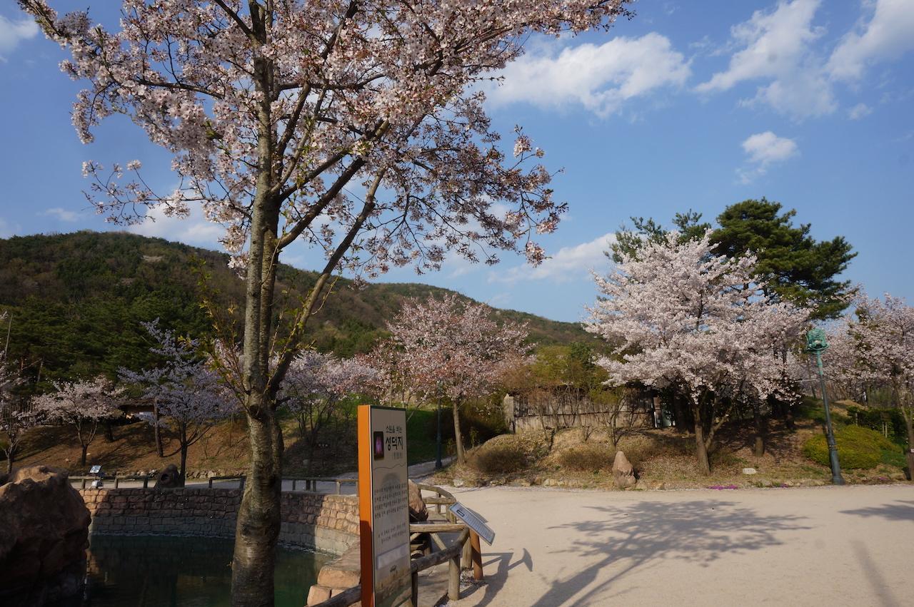 gyeongju shilla park 1