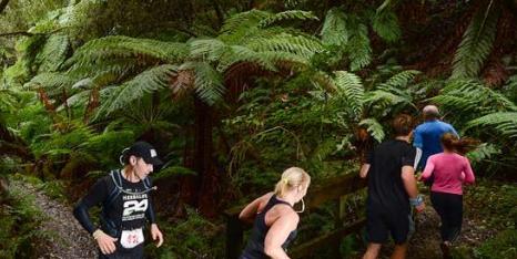 Run Forrest 2017
