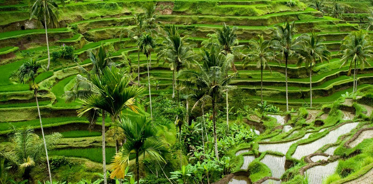 Explore Bali By Running 5 Must Do Routes For All Tourists