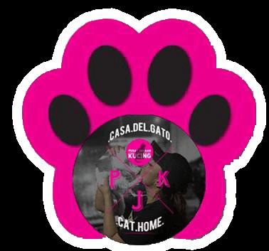 Fund Cat Run 2019